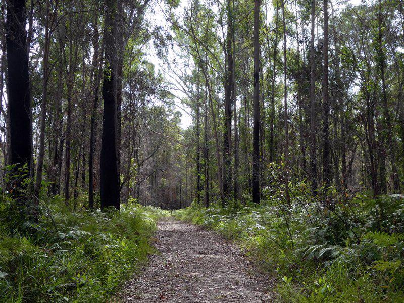 Trail Image for Doonan Creek: North Bushland Loop