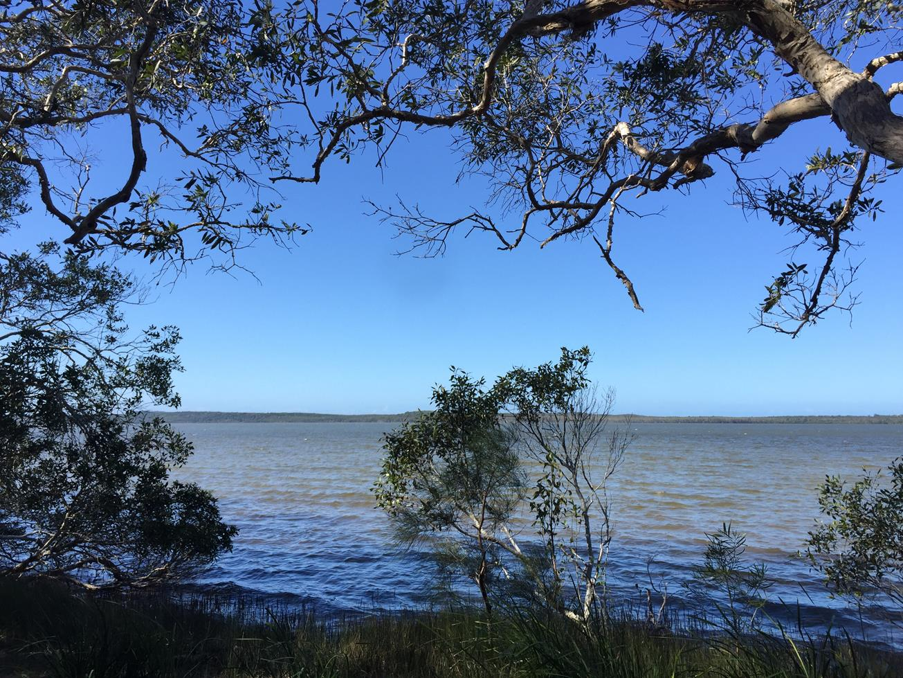 Trail Image for Lake Weyba: Foreshore Walk