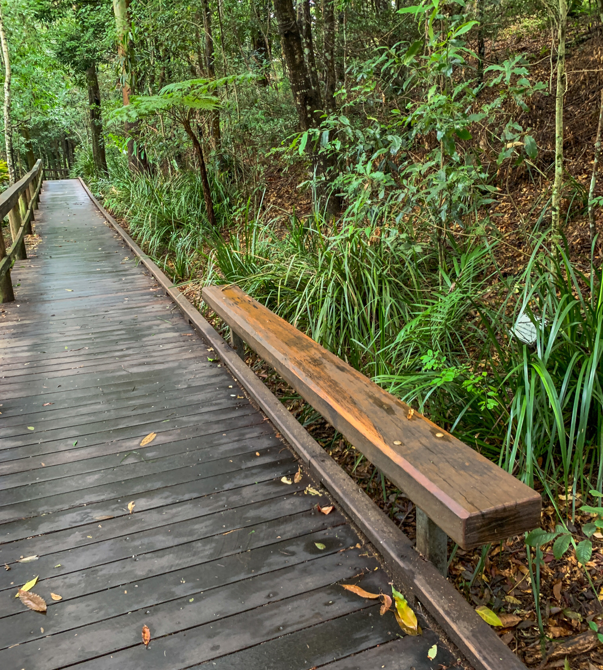 Trail Image for Maleny Boardwalk: Platypus Walk