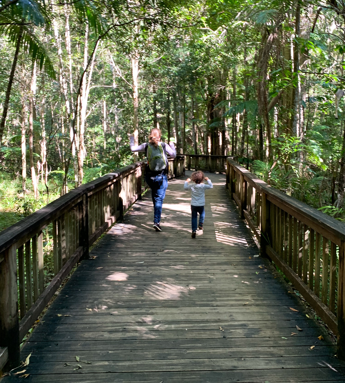 Trail Image for Buderim Forest Park: River Walk