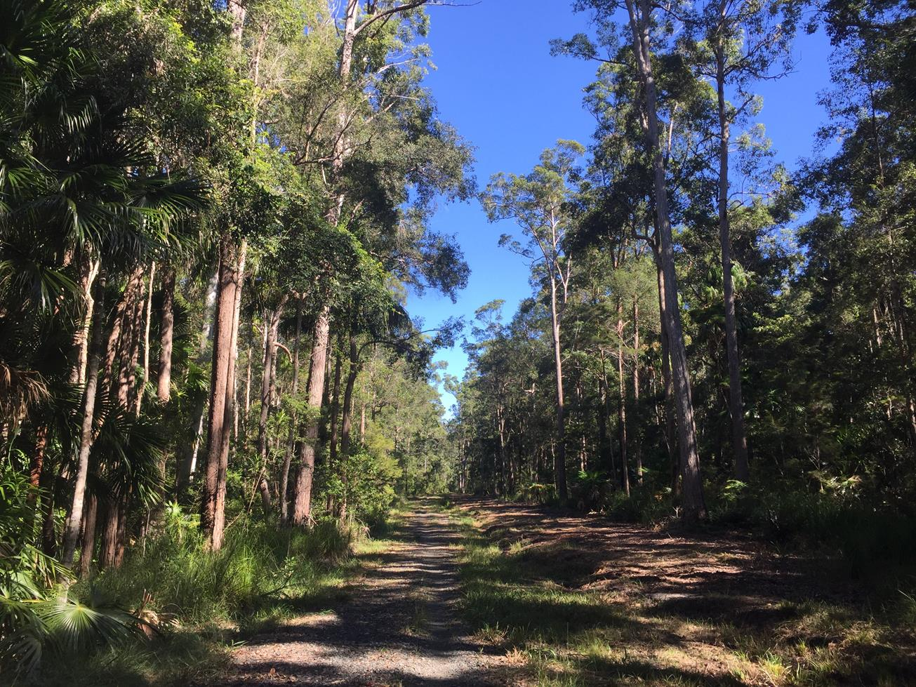 Trail Image for Tewantin National Park: Hovea Circuit