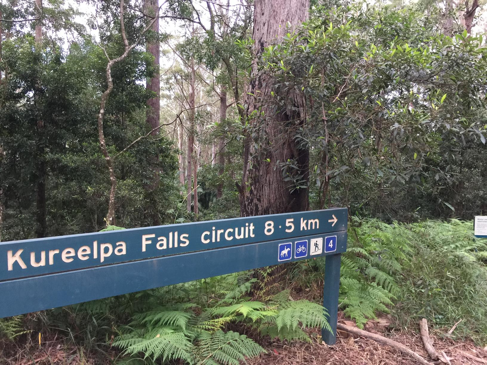 Trail Image for Mapleton National Park: Kureelpa Falls Circuit
