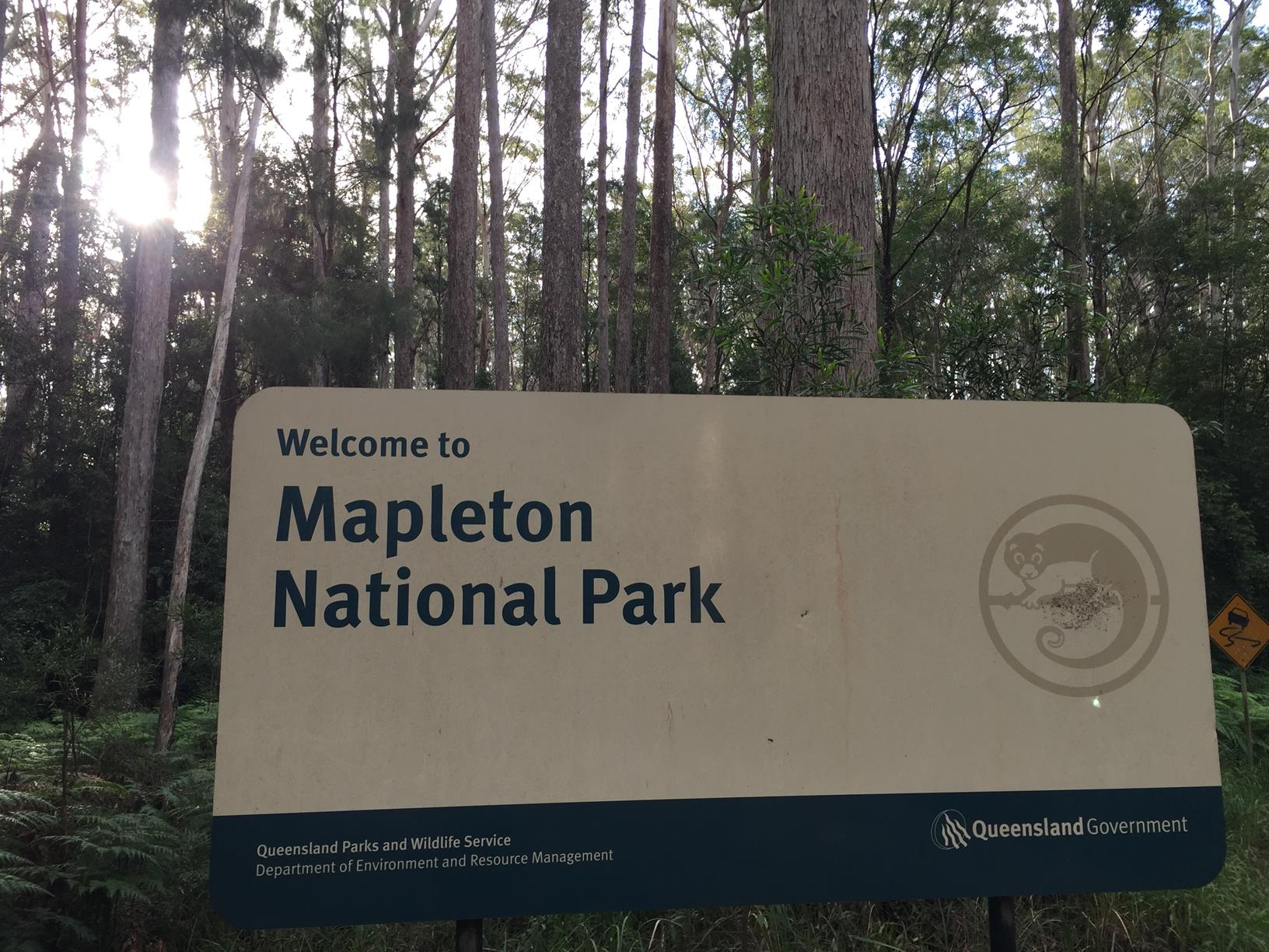 Trail Image for Mapleton National Park: Pilularis Forest Walk