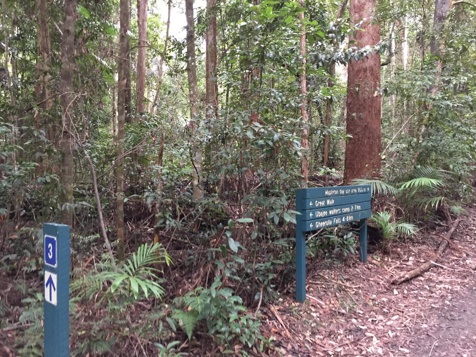Trail Image for Mapleton National Park: Piccabeen Circuit
