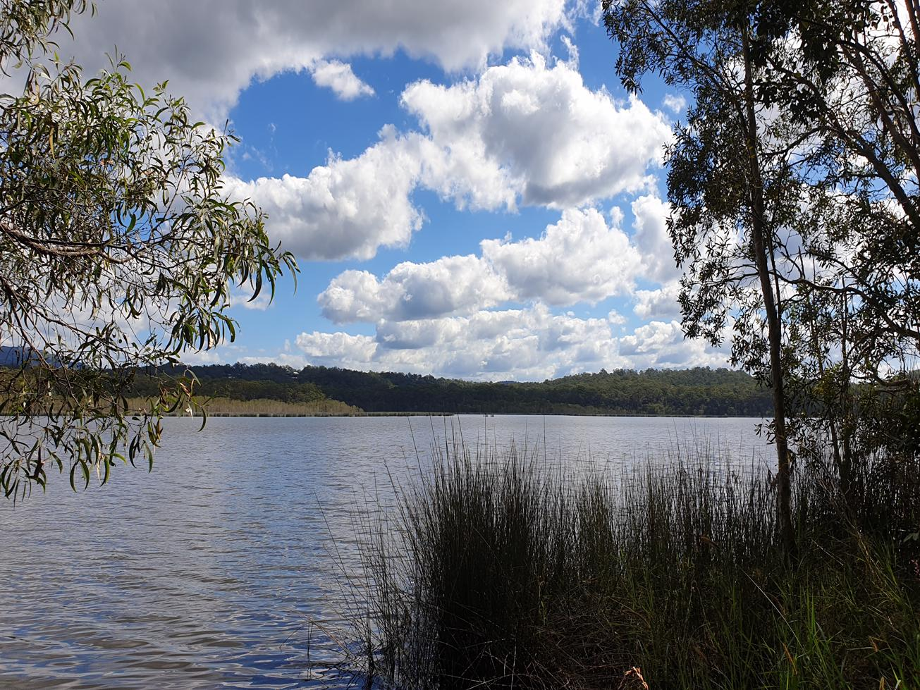 Trail Image for Ewen Maddock Dam: Ferny Forest MTB Loop