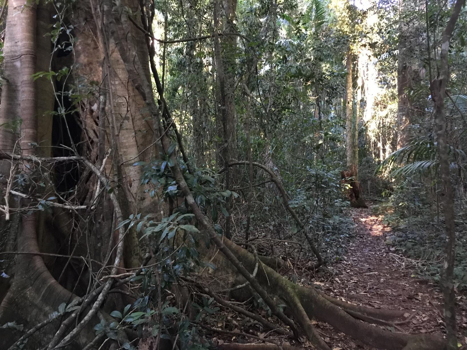Trail Image for Conondale National Park: Booloumba Gold Mine Walk