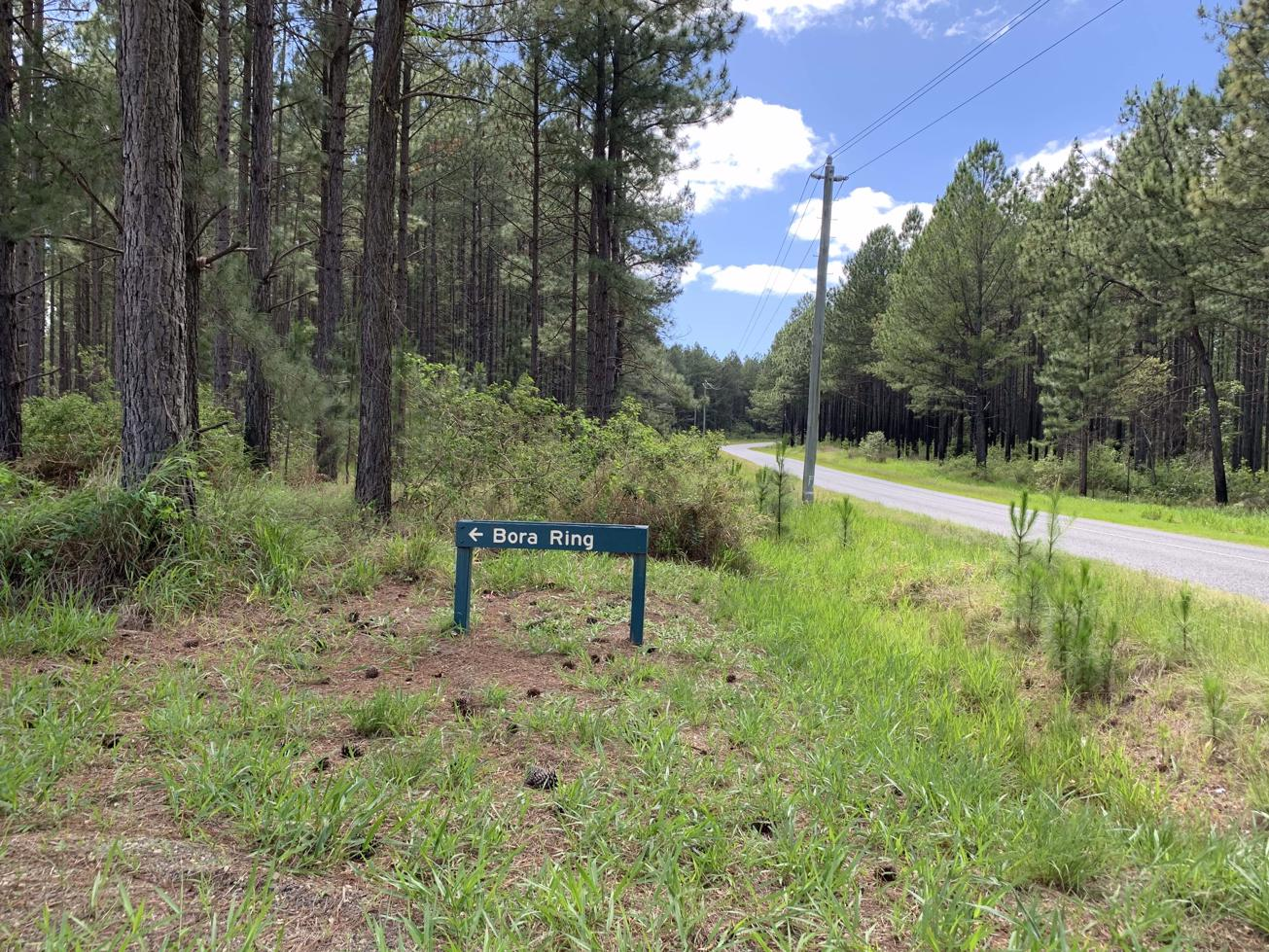 Trail Image for Beerwah State Forest: Bora Ring