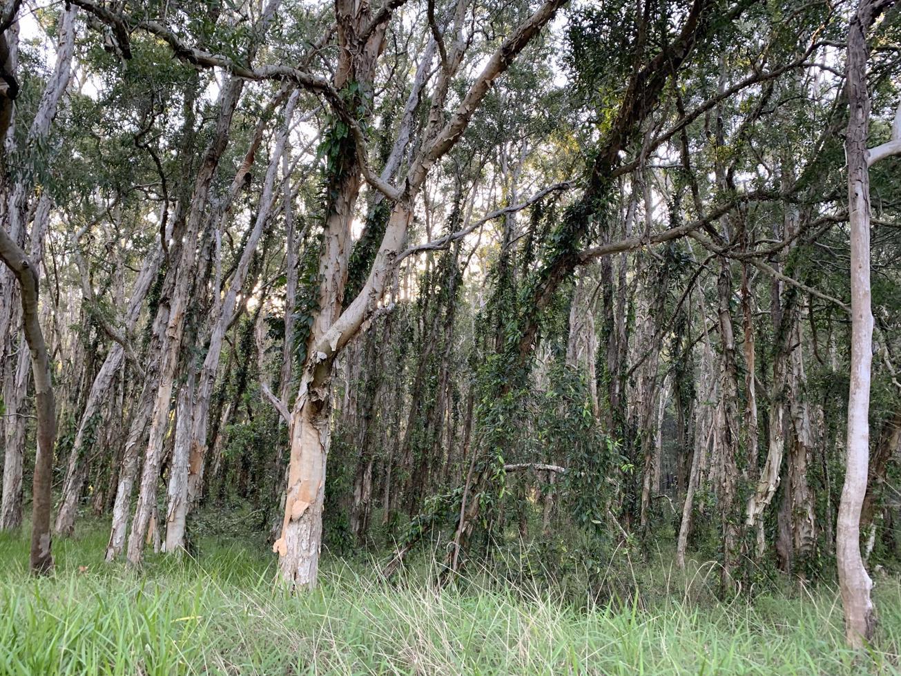 Trail Image