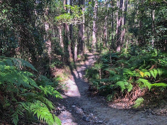 Trail Image for Eumundi Conservation Park: Figbird Trail