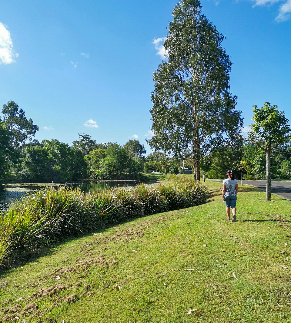 Trail Image for Mooloolah Town and Pond Walk