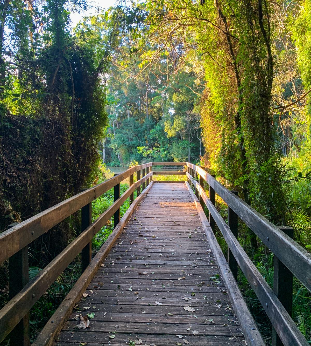 Trail Image for Kolora Park & Bushland Conservation Reserve