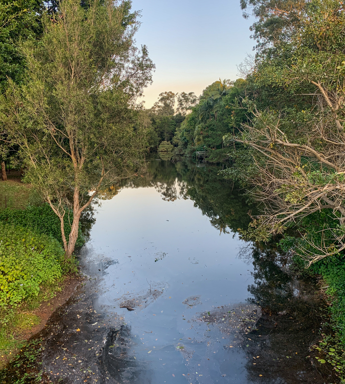 Trail Image for Palmwoods Town Walk