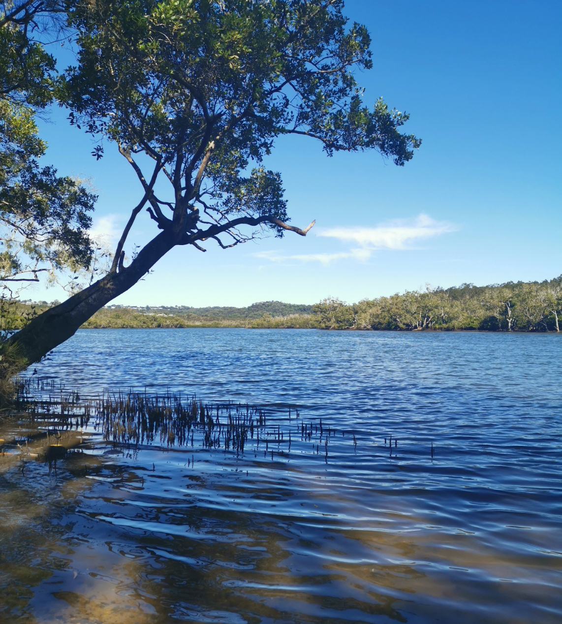 Trail Image for Maroochy River Canoe Trail: Eudlo Creek Paddle