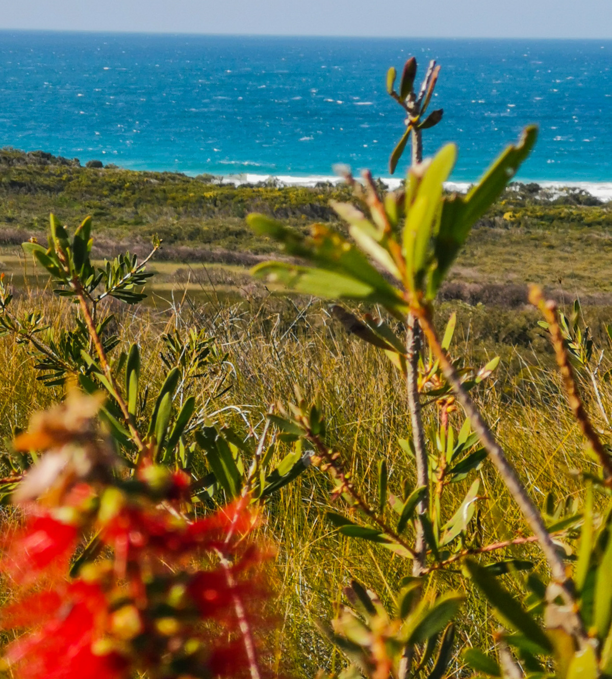 Trail Image for Noosa National Park: Emu Mountain